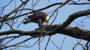Eagle photo from Gary Ludban on Pretty Lake 2